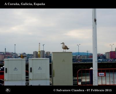 _D7C5708_bis_Coruña_febbraio_2015