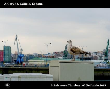 _D7C5709_bis_Coruña_febbraio_2015