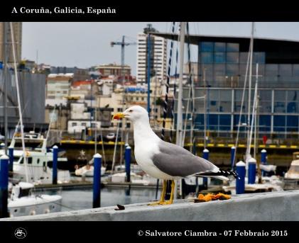 _D7C5712_bis_Coruña_febbraio_2015