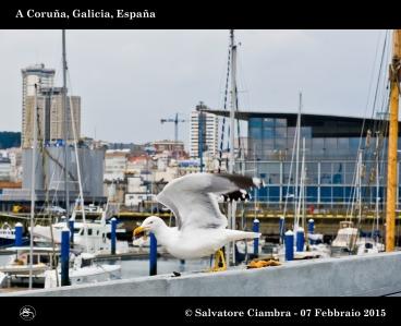 _D7C5713_bis_Coruña_febbraio_2015