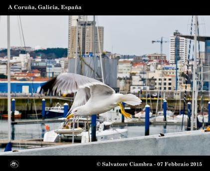_D7C5714_bis_Coruña_febbraio_2015